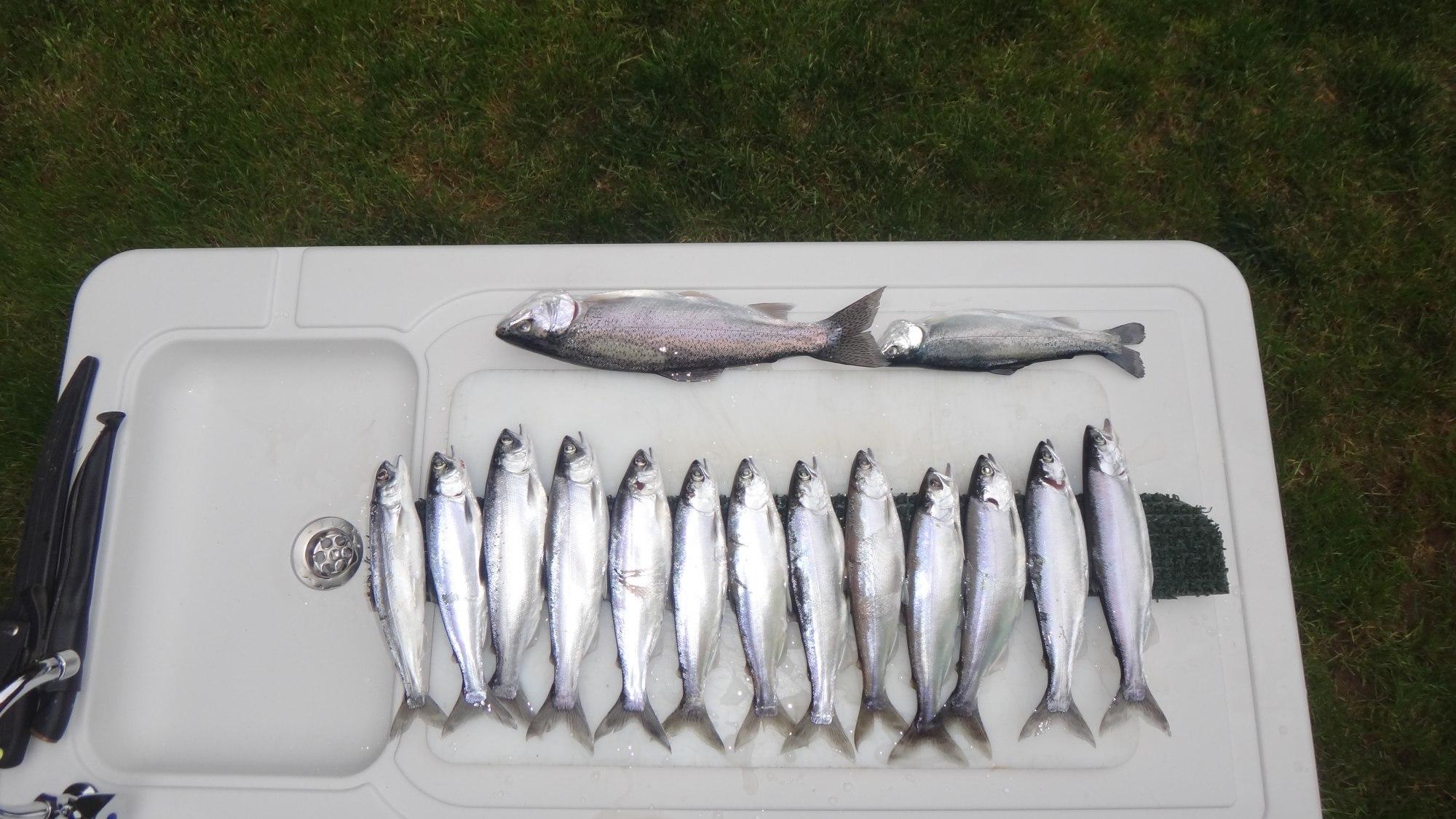Angler Brad Halleck Fish of the Week April 21, 2013