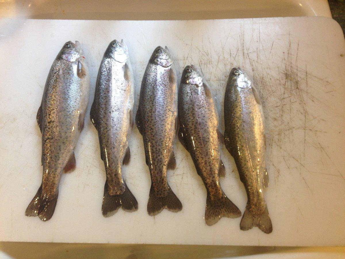 Angler Brad Halleck Fish of the Week January 18, 2014